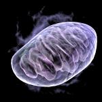 mitochondria-2